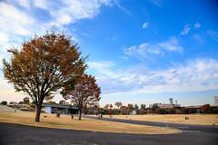 國立昭和記念公園 (湯小米) Tags: tachikawashi tōkyōto 日本 jp 國立昭和記念公園 japan maple 紅葉