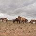 1706_mbe_mongolia_dundgov province_baga cazriin chuluu_093