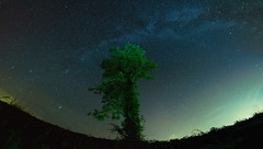 Firmament (Good News Snaps) Tags: night sky tree milkyway longexposure fisheye goodnewssnaps stars