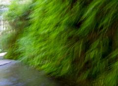 camera movement (Dtek1701) Tags: fuji x xt1 xtranssensor xmount xshooter fujifilm fujinon fujinonxf1024f4ois wideangle ultrawide nature landscape california outdoor northerncalifornia fern ferncanyon prairiecreek water stream abstract art motion green