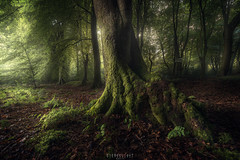 Footprint (Ron Jansen - EyeSeeLight Photography) Tags: netherlands putten speulderbos forest green beech tree old crooked dancing trees moss mosses morning light glow fairytale soft silent silence footprint trex wood wooden summer