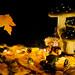 Autumn at home (Rob Schop) Tags: sigma30mm14 autumm herfst indoor sonya6000 stilleven