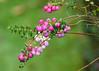 Virginia water lake (piinklady) Tags: virginiawaterlake virginiawater valleygardens piinklady nikond7000 nikonafnikkor70300mm1456gvr berries bee honeybee