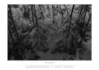 Sunlit branches Belmont Wetlands.
