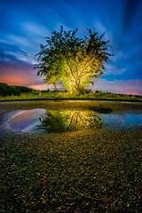Tree of Souls (M-Z-Photo) Tags: colmberg bayern deutschland de langzeitbelichtung nachtaufnahme baum lichter pfütze wasserspiegelung reflxionen wolken mondlicht asphalt strase fischauge fisheye