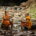 Young Buddhist monk, Novics are washing dishes in the stream at forest.