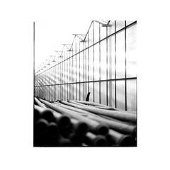 house of glass 1/6 (Michael Herrmann Reiner) Tags: analog mittelformat mamya blackwhite film symmetrie industial nature glass farm mist hightkey white kodak glasshouse geometric neat paspartout iso200 analogisnotdead bw documentation study student htwg constance water mirror sun contrst