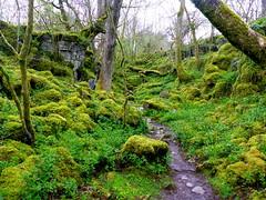 Welsh dragon land (charlottehbest) Tags: charlottehbest easter april 2017 wales lumix ystradfellte fourwaterfalls