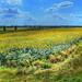 Sonnenblumenfeld, der Große Überblick ;-)