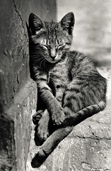 walter_rothwell_003 (walter_rothwell) Tags: walter rothwell photography cairo cats egypt blackandwhite fuji neopan400 35mm film nikonf6 analog monochrome darkroom
