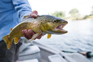 Montana Bighorn River Fishing Lodge 29