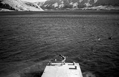 Shooting action at ISO 20. Metajna, Pag Island, Croatia. (wojszyca) Tags: contax g2 zeiss planar 45mm adox cms 20 adotech sea kid boy son wojtekjr 2015 metajna pag island croatia