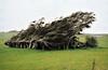 trees (stephen trinder) Tags: stephentrinder stephentrinderphotography aotearoa kiwi landscape nz newzealand catlins trees wind windblown wild