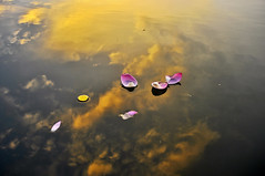 _DSC0169 (ngocnta.1311) Tags: sunset landscape vietnamlandscape lakeview