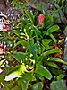 Bromeliads (M.D. Photos) Tags: bromeliads florida hot humid yuck crappy5mptabletphoto