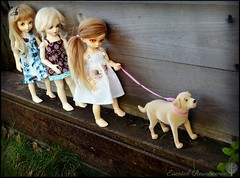 The simple life: playing with the dog before going back to school .... (Essential Resinescence) Tags: poupee doll resin bjd fairyland yosd littlefee ante souldoll ranbi bewithyou strawberry