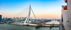 ... bridge ... (wolli s) Tags: erasmusbrücke erasmusbridge erasmusbrug rotterdam bridge panorama zuidholland niederlande nl netherlands holland nikon d7100 stitched aida kreuzfahrt prima