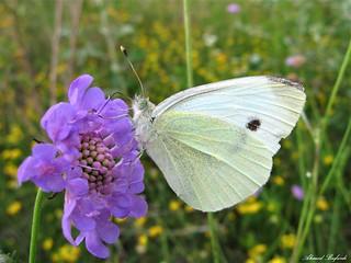 Butterfly 1434