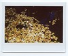 Leaf River (Past Our Means) Tags: instax instant instaxwide instantwide instantcamera instantphotography fall autumn leaf water reflection film istillshootfilm filmisnotdead filmphotography nofilter fujifilm fuji fujifilminstax connecticut ct wanderlust hiking pond river mountain colors yellow analog analogue forest wilderness woods analouge polaroid colorful sleeping giant state park hamden