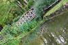 DSC02092 (rivetmoscow) Tags: loire castels chateaux chateau blois sergerivet rivetmoscow сержриве france франция chambord chenonceau