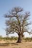 SENEGAL -  334 (Giulio Mazzini) Tags: adventure africa avventure black desert face free holiday landscape libertà portrait river senegal sun teranga world