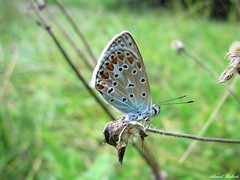 Butterfly 1441 (+780000 views!) Tags: butterfly borboleta farfalla mariposa papillon schmetterling فراشة