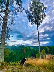 Contemplating? (evakongshavn) Tags: dogsonadventures adventuredog dog dogs dogsthathike landscapephotography landscapelovers landscapecaptures landscape landschaft landskap beautyinnature natur nature light naturnature naturbilder naturephotography naturelovers naturaleza naturphotography