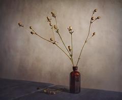 Reminising (shawn~white) Tags: 35mm canon6d shawnwhite autumn bottle flower nostalgia peaceful primelens reflective reminisce reminiscing retro seedhead solitude stilllife texture vintage