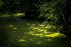 mysterious ditch (soundmoods) Tags: green mysterious dark shadows water weed tree light ditch
