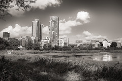 Woodberry Wetlands.... (AJFpicturestore) Tags: woodberrywetlands reservoir london londonwildlifetrust flats highriseflats development growth monochrome monochromemonday hmm alanfoster