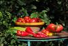 CKuchem-5547 (christine_kuchem) Tags: bauerngarten biogarten bioqualität ernte erntezeit fleischtomate garten gemüse gemüsegarten grün gurke nutzgarten paprika peperoni pflanze rarität sommer sorte sorten sortenvielfalt tomate vielfalt zucchini bio biologisch frisch gelb gesund lecker natürlich orange reif rot selten unbehandelt