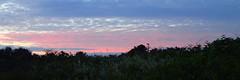 et bientôt le soleil... (8pl) Tags: leverdesoleil couleurs nuages paysage nature landscape champ herbes mer océan aube matin petitmatin sark sercq horizon