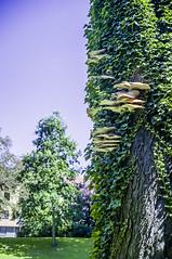 Monstrous Mushrooms (Ian David Blüm) Tags: tree vines mushrooms overgrowth decay necrotic symbiotic
