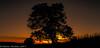 Golden Silhouette (Steven Peachey) Tags: sunset landscape tree golden goldenhour sky clouds sun ef1740mmf4l 5dmarkiv canon5dmarkiv leefilters formatthitech lee09gnd stevenpeachey lightroom silhouette colours evening dusk graduatedndfilter hitech09gnd