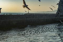 2013-Turquia-Istambul-0397.jpg (Casal Partiu Oficial) Tags: gaivota istambul bosforo turquia bird bosphorus bosphorusstrait estreitodebosforo istanbul passaro seagull turkey tr