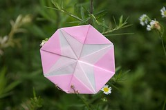 Morning Glory and Erigeron annuus (Ichigo Miyama) Tags: アサガオとヒメジョオン morningglory erigeronannuus origami おりがみ ヒメジョオン 折り紙 paper アサガオ flower おりがみ写真 origamiphotoorigami 花 origamiphoto
