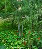 escenas en el botanic 4 (carlosjunquero) Tags: botanic amapolas