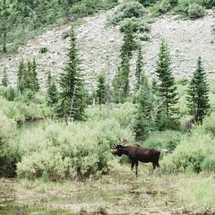 Grand Teton National Park (Zac Staffiere) Tags: backpacking wilderness wildlife grandteton teton camping hiking adventure