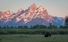 Grand Teton Sunrise (Jeremy Duguid) Tags: grand teton national park tetons nature landscape travel bison wildlife sunrise mountains trees wyoming jackson hole alpineglow beauty jeremy duguid gtnp sony