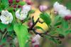 Flower II (theReedHead) Tags: thereedhead olympusem1 olympuscamera olympus45mmf18 realism whiteflowers milwaukeelakefront milwaukee wisconsin duckpond veteransparkmilwaukee milwaukeephotographers wisconsinphotographers closeups flora flowers foliage blossoming blossoms flowering