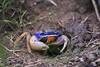 SSC_5026 (§ Santiago §) Tags: cangrejo capurganá colombia oceano caribe colombiano sapzurro la miel panama