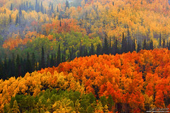 fall_in_the_gunnison_national_forest_by_kkart-d84nwl5 (rosacruzjl) Tags: