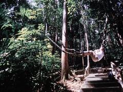 1994_Singapore_2016-07-18_Photo_165 (Matthias & Paula) Tags: singapore sentosa kuala lumpur malaysia cameron highlands zoo japanese gardens