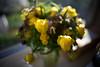 Flowers (Guanch) Tags: lomb baltar 5023 bausch