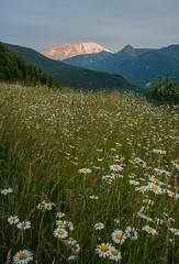 Mt St Helens Glows in the Distance (Nancy King Photography) Tags: evening wildflowers daisies flowers washington mtsthelensnationalvolcanicmonument mtsthelens clouds