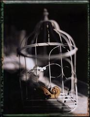 liberté (scan de négatif) (sul tasto) Tags: polaroid violin fp100c fuji 4x5 aeroektar kodak speedgraphic graflex
