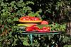 CKuchem-5641 (christine_kuchem) Tags: basilikum bauerngarten biogarten bioqualität ernte erntezeit fleischtomate garten gemüse gemüsegarten grün gurke hokaido kräuter kürbis nutzgarten paprika peperoni pflanze rarität sommer sorte sorten sortenvielfalt tomate vielfalt zucchini bio biologisch frisch gelb gesund lecker natürlich orange reif rot selten unbehandelt