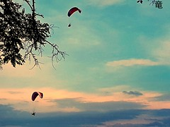 paragliders [explored] (Ola 竜) Tags: paragliding paragliders parashooters bluesky evening sunset sky goldenhour skyscape sport flight darksilhouettes branch twigs vivid highcontrast colorful composition warmtones skydiver