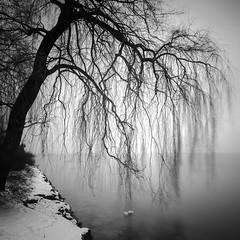 desire (ArztG.|Photo) Tags: love trees mono square fine art austria atmosphere arztg|photo