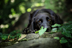 Amina (Vkarpi) Tags: dog dogs forest green greenery nature ivy animal animals bordercollie mixbreed
